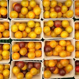 rajčice paradajzi pomidori