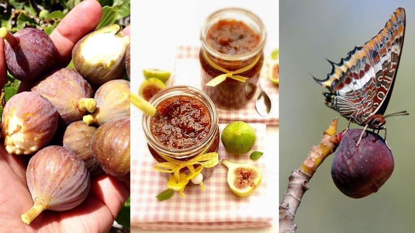 recept za džem od smokava i rogača
