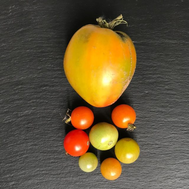 The last tomatoes from my terrace garden Lets see Ifhellip