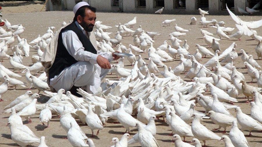 reportaza o hrani u Afganistanu