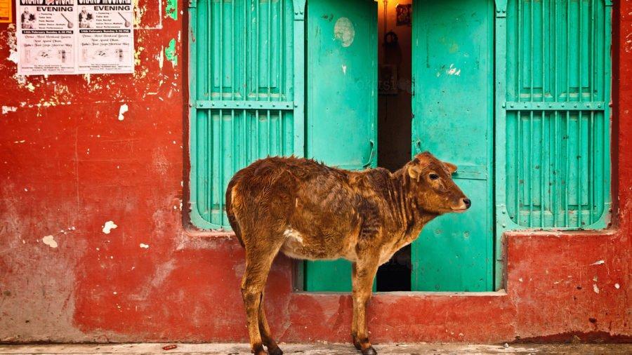 fotografija iz Indije