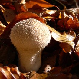 fotografija gljive