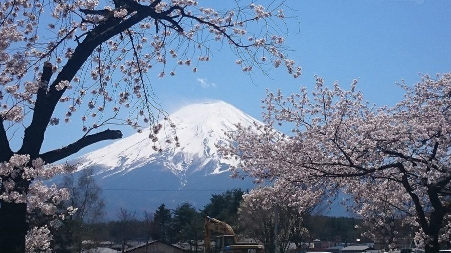 cvjetanje trešnje