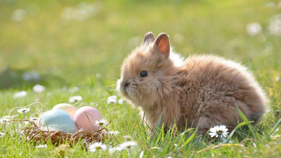 Okusi Uskršnji piknik i zeko u prirodi
