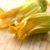 recept za punjene cvjetove tikvica
