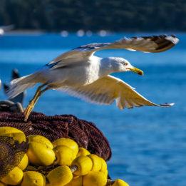 Leteći ribari