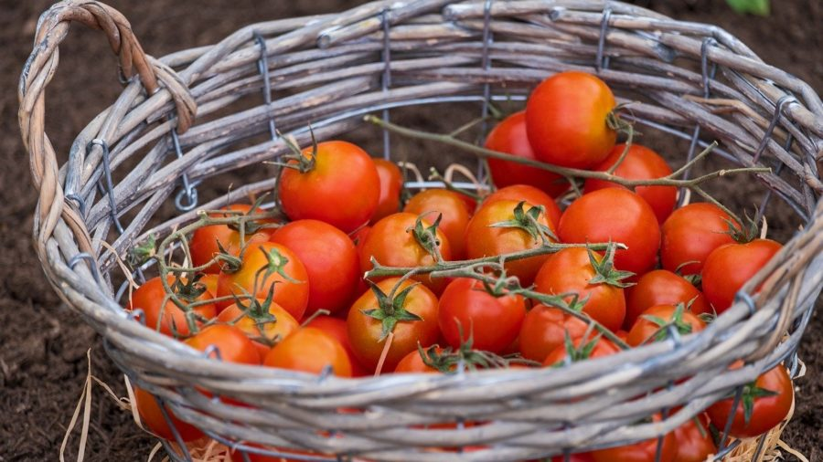recepti s rajčicama